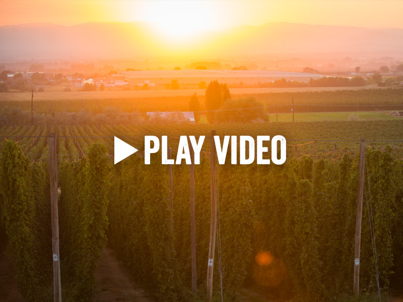 Yakima Valley Hops and Beer Virtual Tour